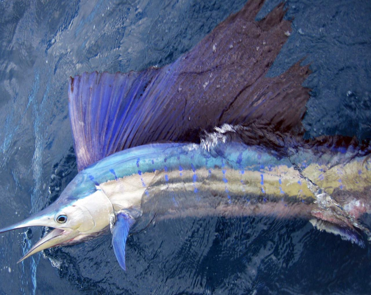 Private Group Sport Fishing Charter - Full Day (max 4 people) 50% DEPOSIT OPTION