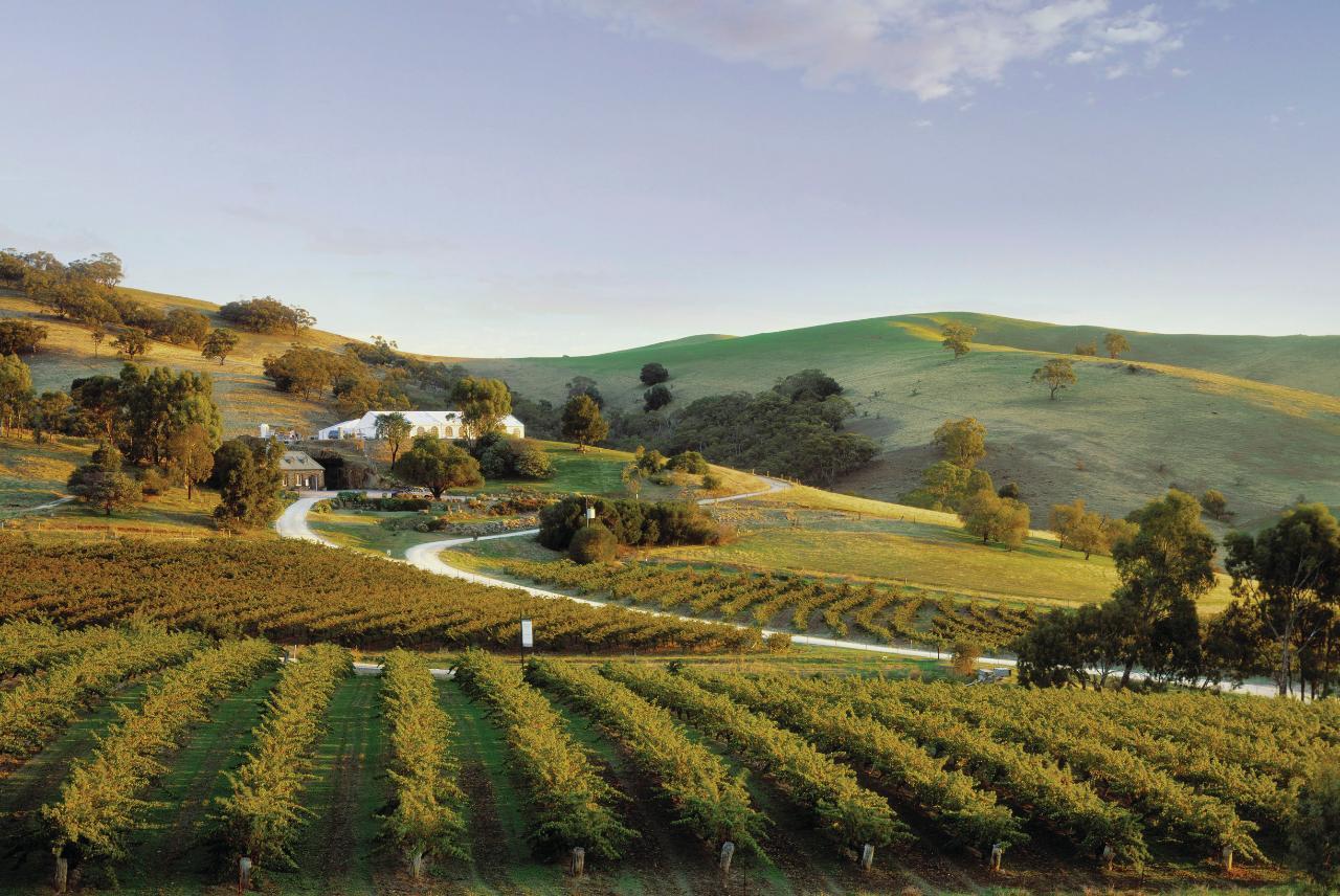 Barossa - History & Heritage Private Wine Tour