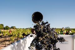 Discover McLaren Vale - Wine Sustainability