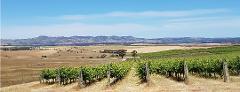 Barossa - Small Group Wine Tour