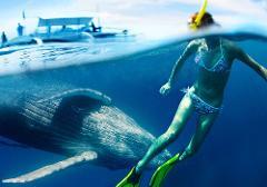 2019 Whale swim eco retreat 9th- 17th September single