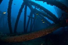 Key Biscayne Deep Dives from Lancelin