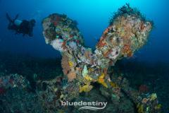 Rottnest Island Deep Dives
