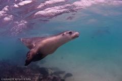 Carnac Island Dive or Snorkel