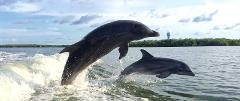 2 Hour Private Sightseeing /Dolphin Cruise