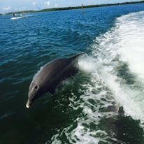 2 Hour Public Sightseeing /Dolphin Cruise