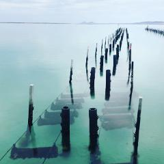Coffin Bay Oysters, Ocean and Nature Tour - Full Day