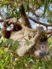 Exceptional Port Lincoln, Seafood and Wildlife Tour