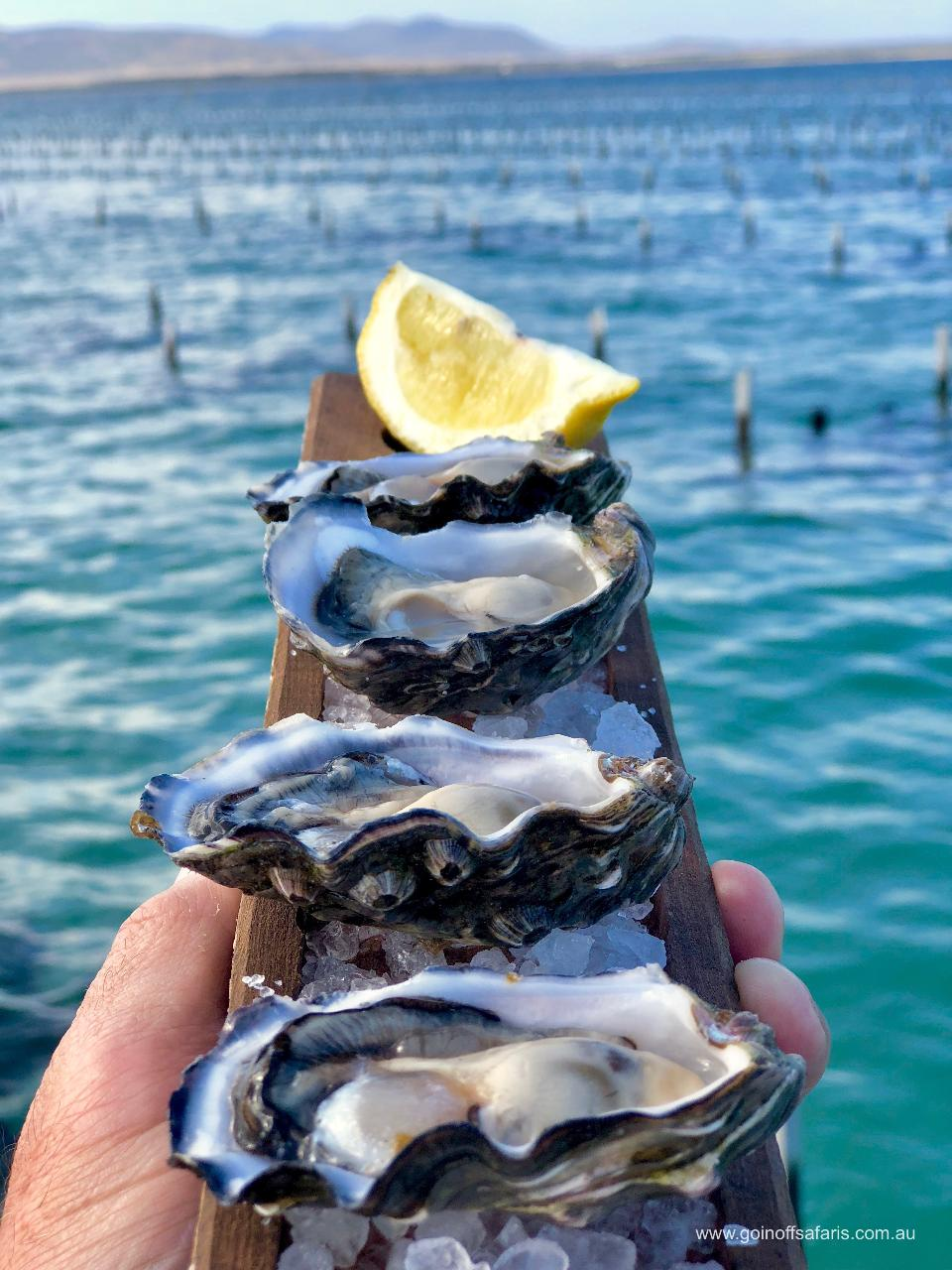 Coffin Bay Oysters, Ocean and Nature Tour