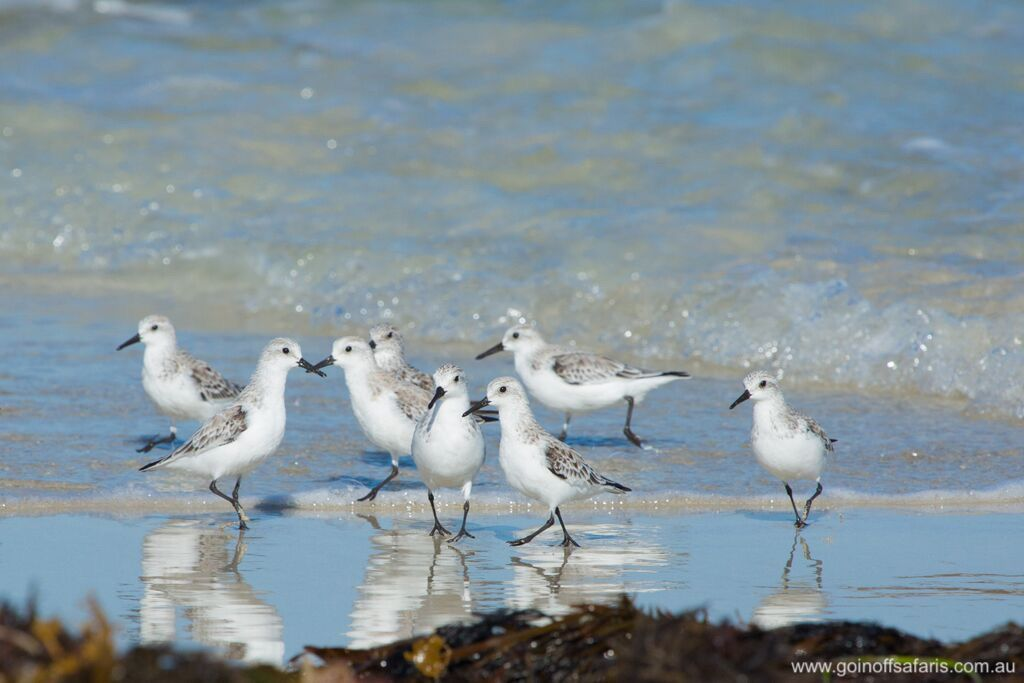 Birdwatching on the Southern Eyre Peninsula