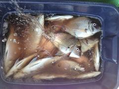 4:30 PM to 8:30 PM PORGY FISHING