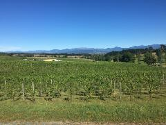 Guided -  Moutere Hills Winery Tour on E-Bikes