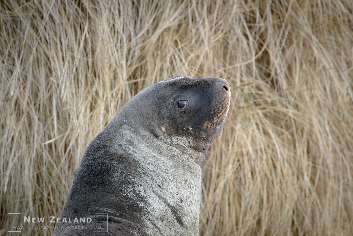 2022 - NZ Wildlife Photography Tour - 9 days