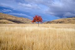 Autumn  Landscape – Expressive Retreat
