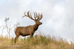 High Country Deer – Expressive Retreat