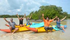 Kayak through the mangroves