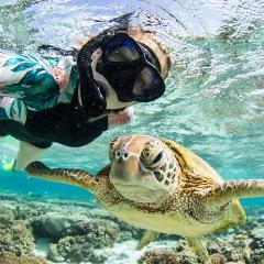 SNORKEL ONLY  Day Tour to Lady Musgrave Island Lagoon