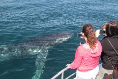 Whale Eco Tour photo 3