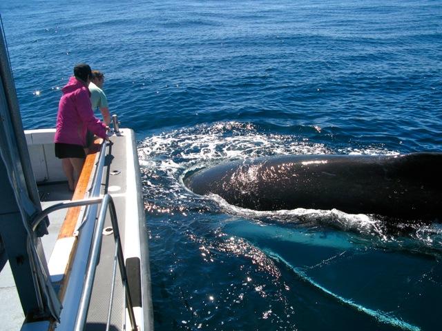 Wildlife cruise / Whale watch in season