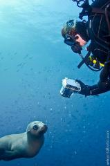 Guided scuba dive or snorkel with seals or try the wreck dive