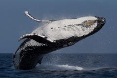 2.5hr Express Whale Watch Cruise