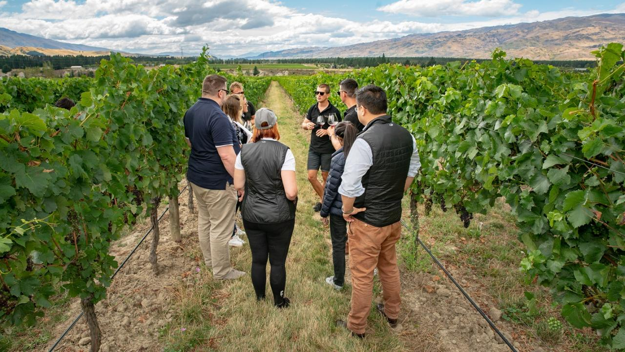 Vineyard Tour by car (Central Otago)