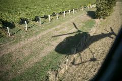 Helicopter Vineyard Tour (Marlborough)