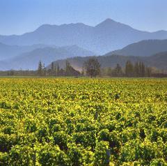 Cloudy Bay Virtual Wine Tasting