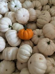 Field Trip - Fall Pumpkins