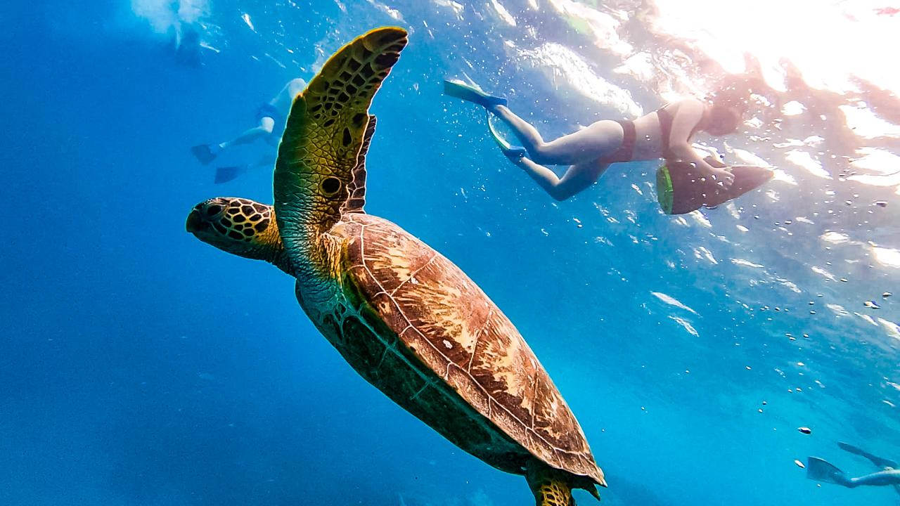 Turtle Sea Scooter Safari