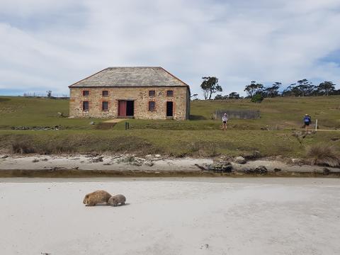 Maria Island Winter Picnic Tasmania Australia