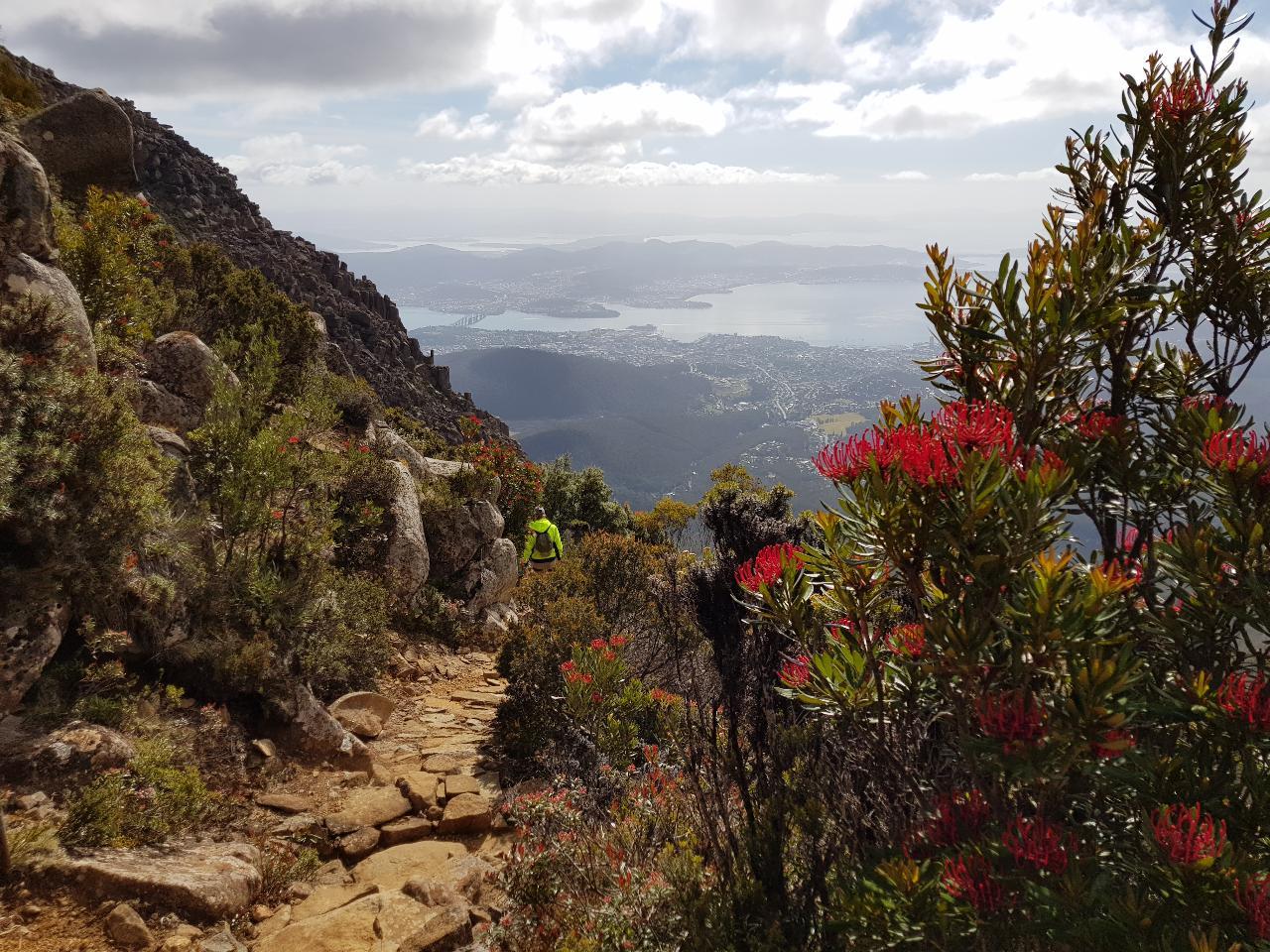 Mt. Wellington Half-Day Hiking Tour