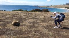 3 Day Option: Maria Island National Park + Mount Field National Park + Cape Raoul, Tasman National Park