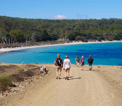 4 Day Option: See Tasmania Special: Wildlife Walks, Coastal & Mountain Hikes + Beer Walk