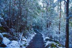 Mt. Wellington Winter Walk