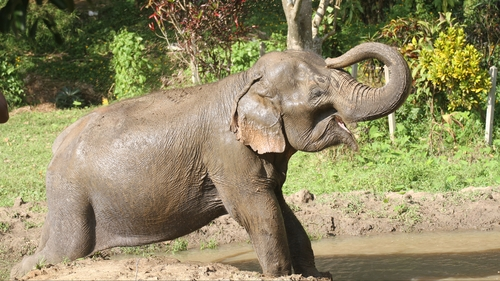 HD Thai Elephant Care Center AM
