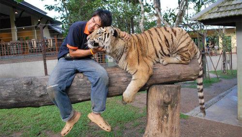 Tiger Kingdom & Long Neck Hilltribes