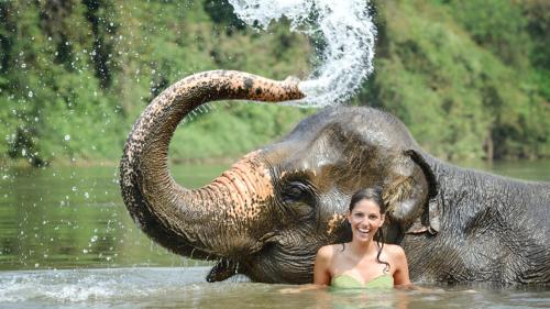 Elephant Trek & Bathing and Waterfall at Khao Lak PM