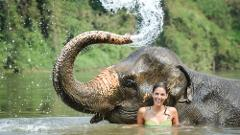 Elephant Trek & Bathing and Waterfall at Khao Lak PM