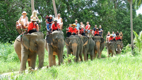 Elephant Trekking Afternoon 12.30 PM