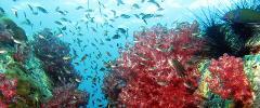 Half Day Snorkeling – Koh Hin Sorn, Koh Dong Koh Rokloy Koh Peing