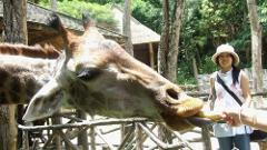Chiang Mai Zoo Admission with Roundtrip Transfer  - 08.30am