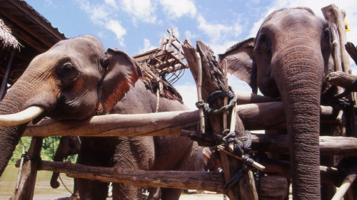 Kok River & Elephant Ride AM