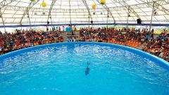 Dolphins Bay Phuket Show - Regular Seat