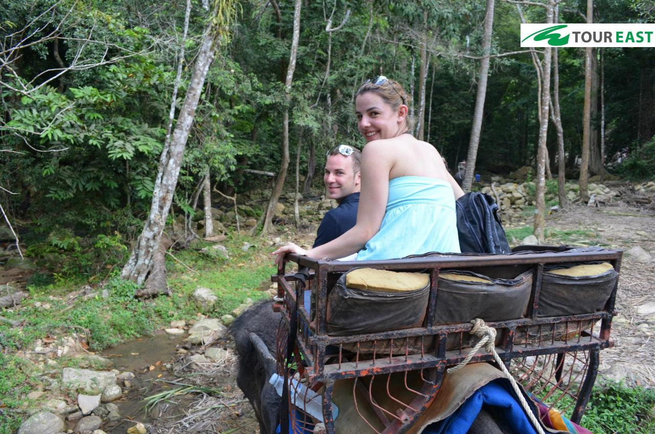Jungle Tour With 4 Wheel Drive Jeeps