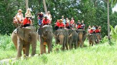 Elephant Trekking Morining 10AM