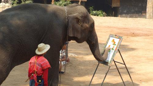 Chiangmai Safari