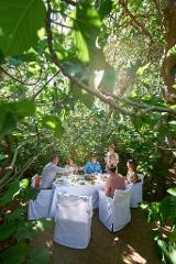 Hannaford & Sachs Enchanted Fig Tree + Tour