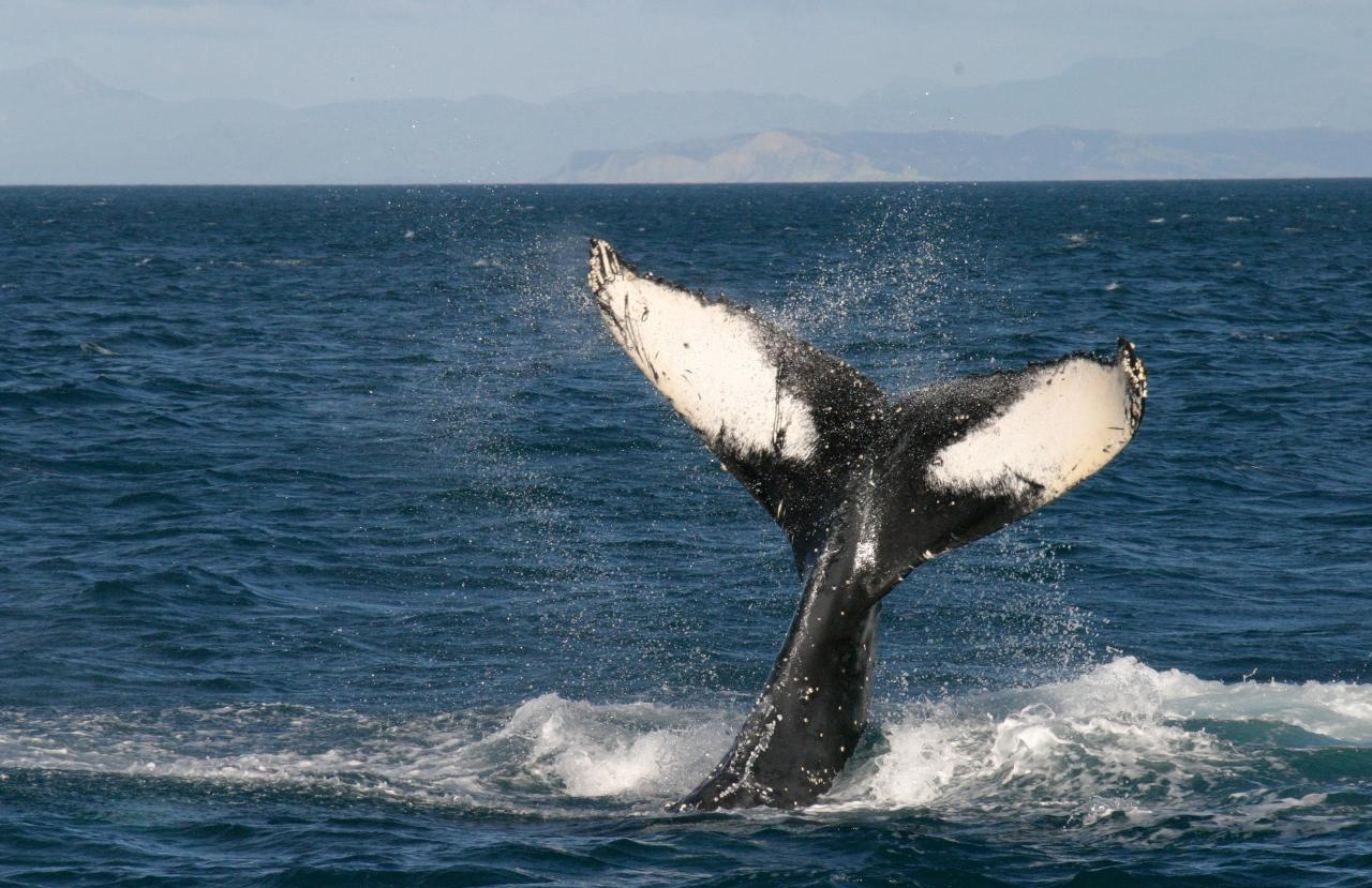 Whale Watching and History Cruise