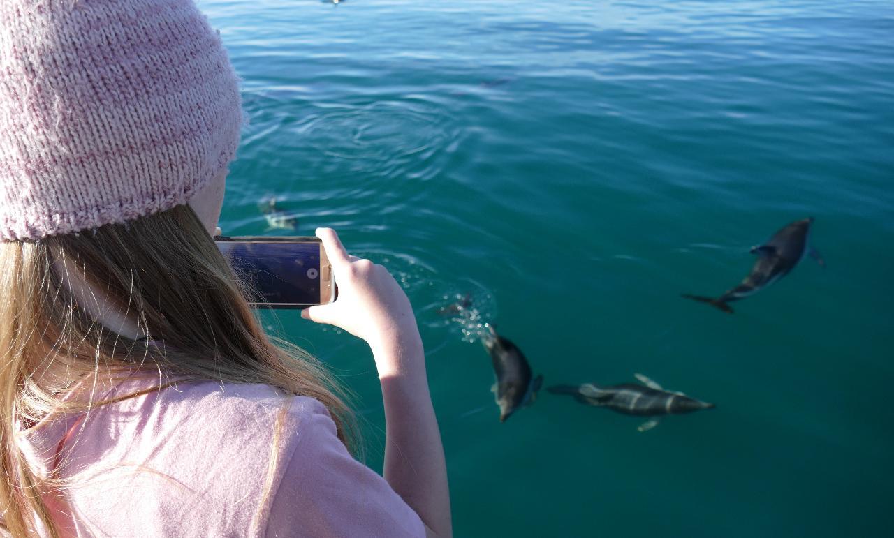 Motuara Island and Dolphin Cruise  - KIDS Go Free (School Holidays Only)